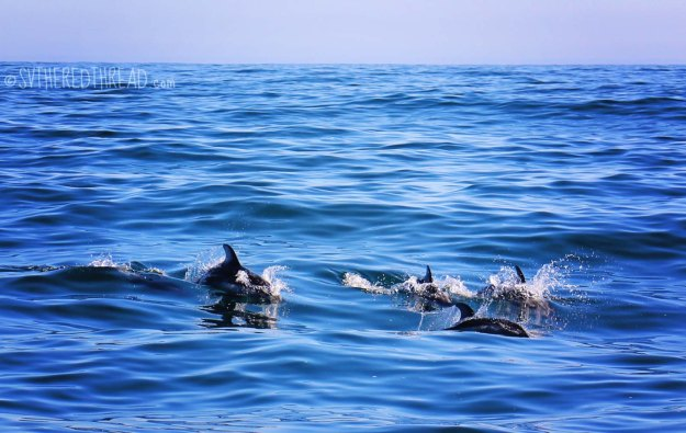 Dolphins_galore