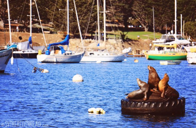 Monterey_Sea lion serenade