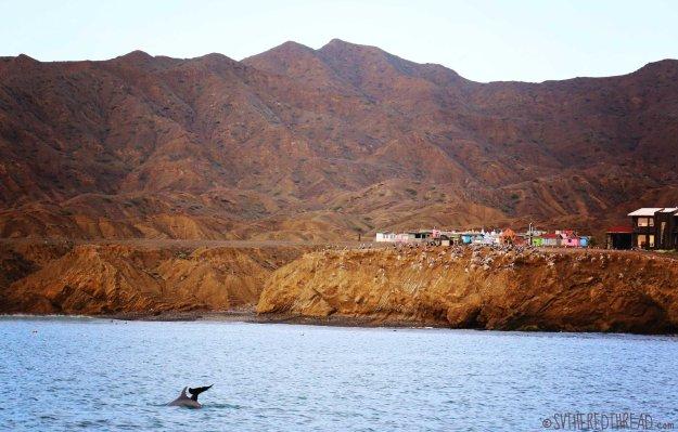 #Bahia de Tortugas_Dolphins diving