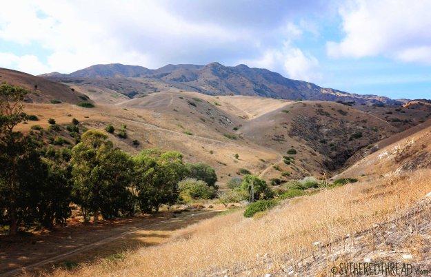 #Santa Cruz Island