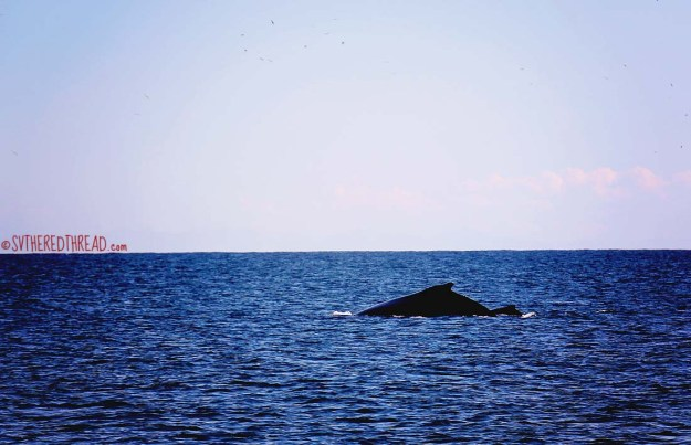 #Isla Isabela_Humpback mama and calf