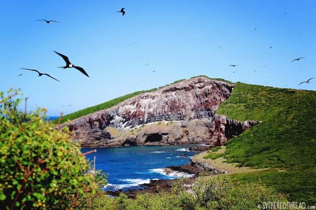 #Isla Isabela_Vista1