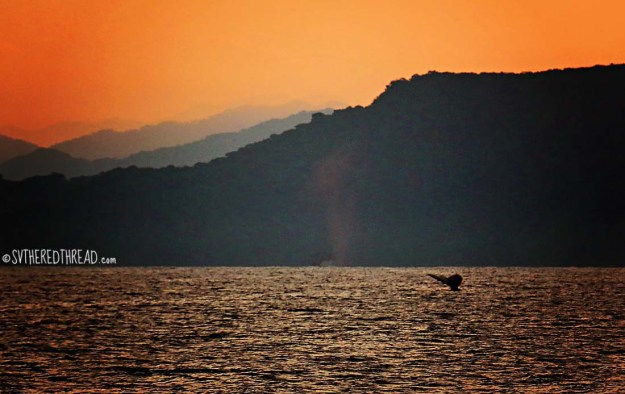 #Passage to La Cruz_Sunrise humpback1