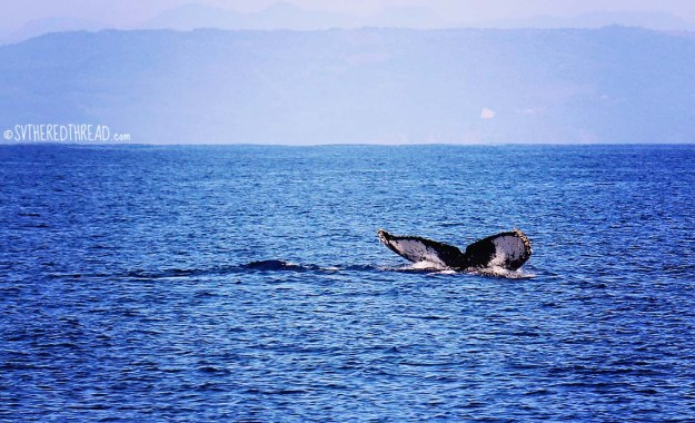 #Passage to Chacala_Whale fluke2