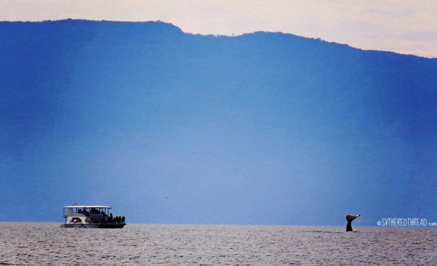 #Passage to Chamela_Banderas Bay whale show