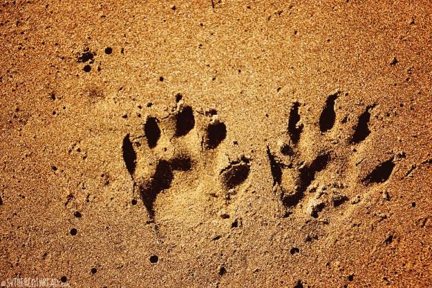 #Bahia Iguanita_Monkey paws