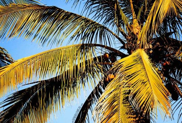 #Mazatlan_Palms