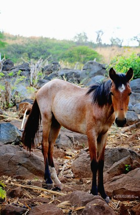 #Isla Meanguera day 2_Colt near Salvadorcito