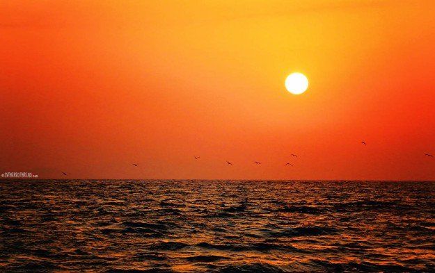 #Passage to Puesta del Sol_Seabirds at sunrise