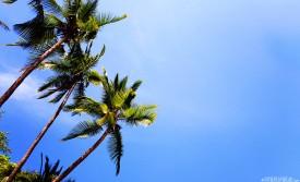 #Ballena beach_Palms
