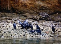 #Jesusita y Los Cedros_Vultures