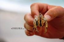 #Manuel Antonio_Hermit crab