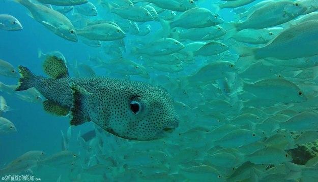 #Isla del Cano_Fishies
