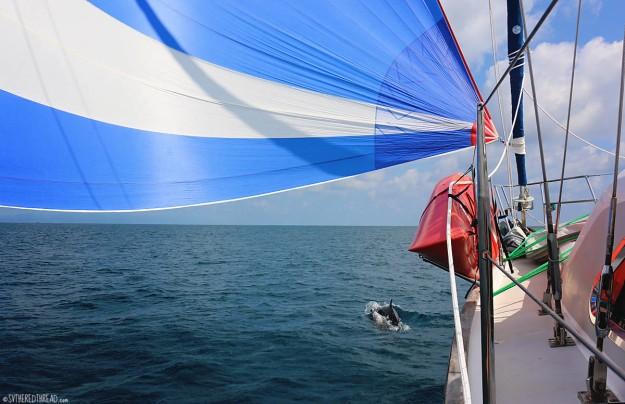 #Bahia Drake to Golfito_Dolphins + Gypsy