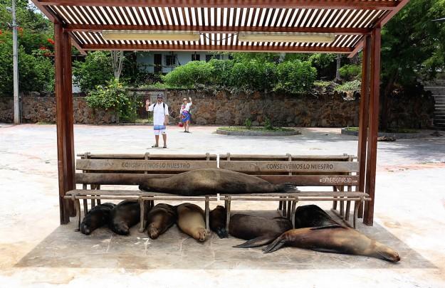 #San Cristobal_Sea lions2