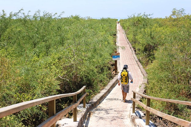 #Isla Santa Cruz_Playa Brava_Neil on the path