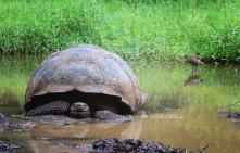 #Isla Santa Cruz_Rancho Primicias_My mud bog!
