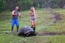 #Isla Santa Cruz_Rancho Primicias_Tortoises in the rain