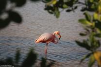 #Isla Isabela_Pink flamingo