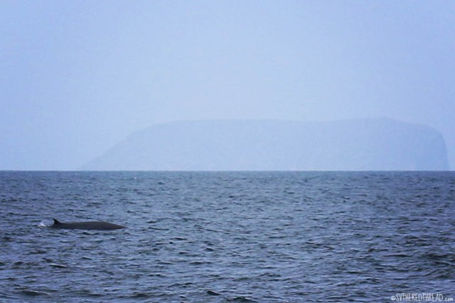 #Passage to Isla Isabela_Mysterious whale
