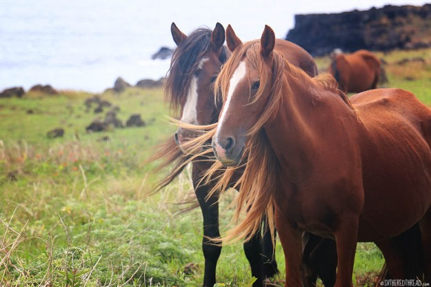 rapa-nui_northern-horses