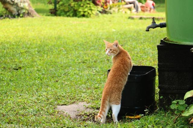 taravai-gambiers_meow