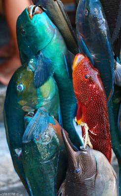 #Raiatea_Fishing tourney2