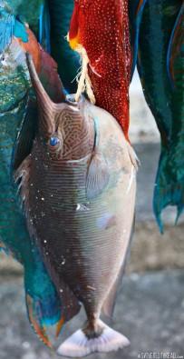 #Raiatea_Fishing tourney3