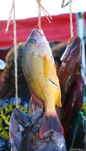 #Raiatea_Fishing tourney4