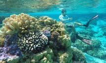 #Bora Bora_Snorkeling Neil1