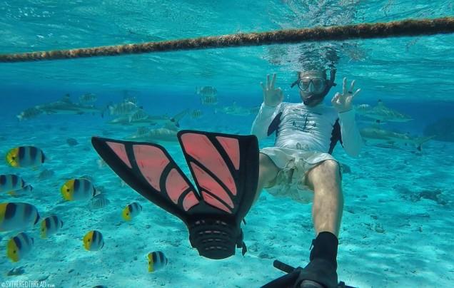#Bora Bora_Snorkeling Neil3