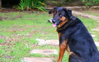 #Tahaa_Doggy